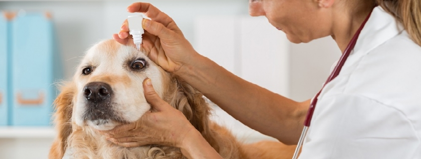 Veterinary Office Cleaning Services Kelowna